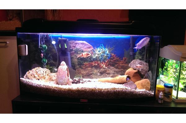 112l sera aquarium mit gew lbter scheibe in torgau fische aquaristik kaufen und verkaufen. Black Bedroom Furniture Sets. Home Design Ideas
