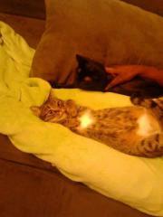 2 Katzenmädchen in