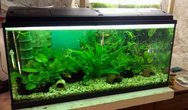 200 liter aquarium mp verkauf tausch in waldmohr fische for Aquarium 200 litres