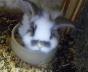3 Brüder ,Kaninchen