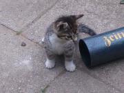 4 Kätzchen zu