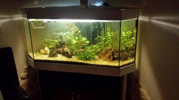 500 liter eckaquarium komplett in calw fische aquaristik kaufen und verkaufen ber private. Black Bedroom Furniture Sets. Home Design Ideas