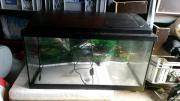 54 Liter Aquarium