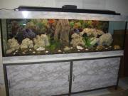 540 Liter Aquarium