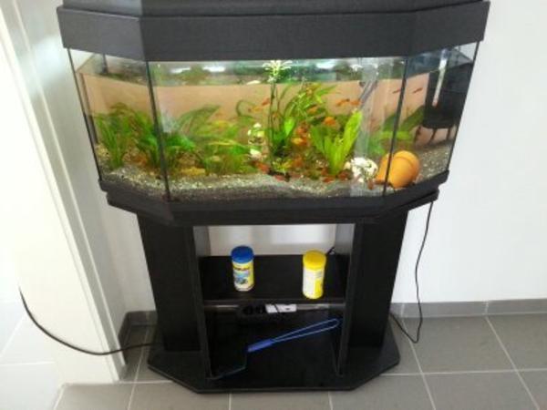 80liter 6 eck aquarium mit inhalt in sinzheim fische aquaristik kaufen und verkaufen ber. Black Bedroom Furniture Sets. Home Design Ideas