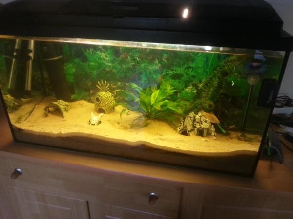 aquarium fische zubeh r in hamm westfalen kaufen. Black Bedroom Furniture Sets. Home Design Ideas