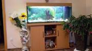 Aquarium 200 L