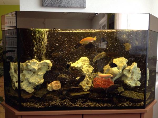 aquarium 200l komplett fische aquaristik. Black Bedroom Furniture Sets. Home Design Ideas