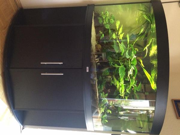 aquarium 350l eckaquarium juwel trigon in m nchen fische. Black Bedroom Furniture Sets. Home Design Ideas