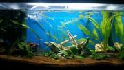 Aquarium 60liter