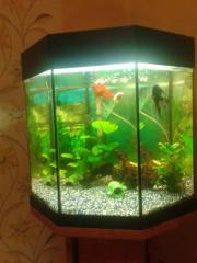6 eckiges aquarium