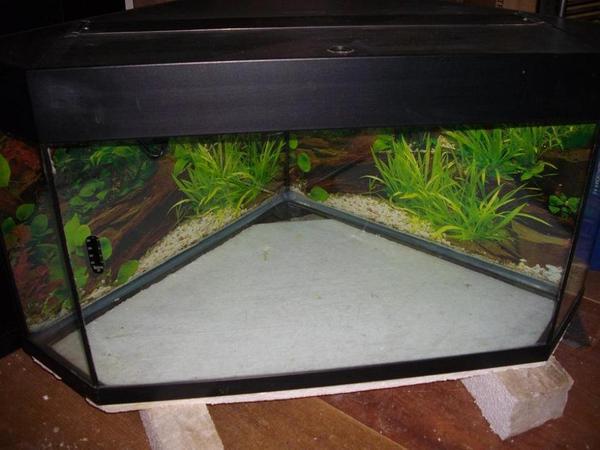 Aquarium Als Terrarium Verwenden : Verkaufe mein ca  liter aquarium als terrarium
