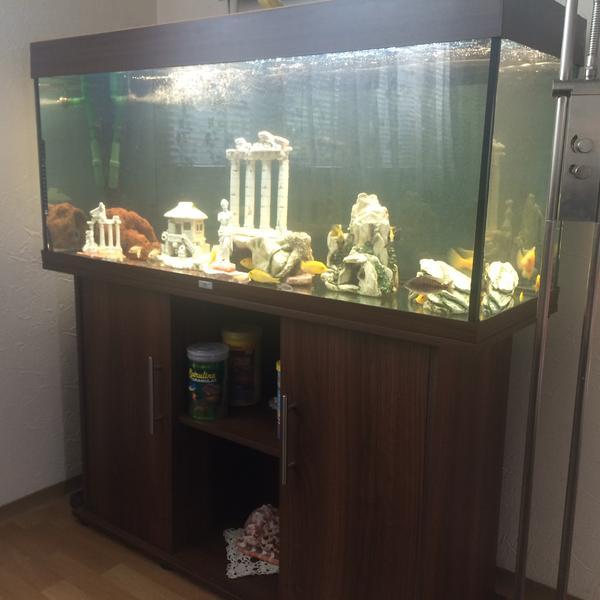 aquarium in magstadt fische aquaristik kaufen und. Black Bedroom Furniture Sets. Home Design Ideas