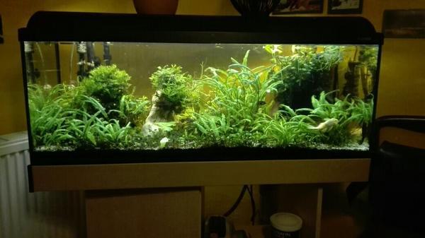 aquarium komplett in wallenfels fische aquaristik. Black Bedroom Furniture Sets. Home Design Ideas