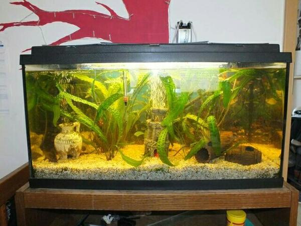 aquarium mit fischen in gie en fische aquaristik kaufen und verkaufen ber private kleinanzeigen. Black Bedroom Furniture Sets. Home Design Ideas
