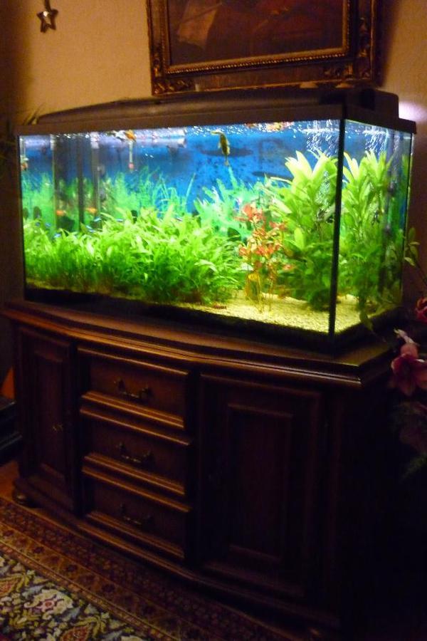 200l aquarium neu und gebraucht kaufen bei. Black Bedroom Furniture Sets. Home Design Ideas