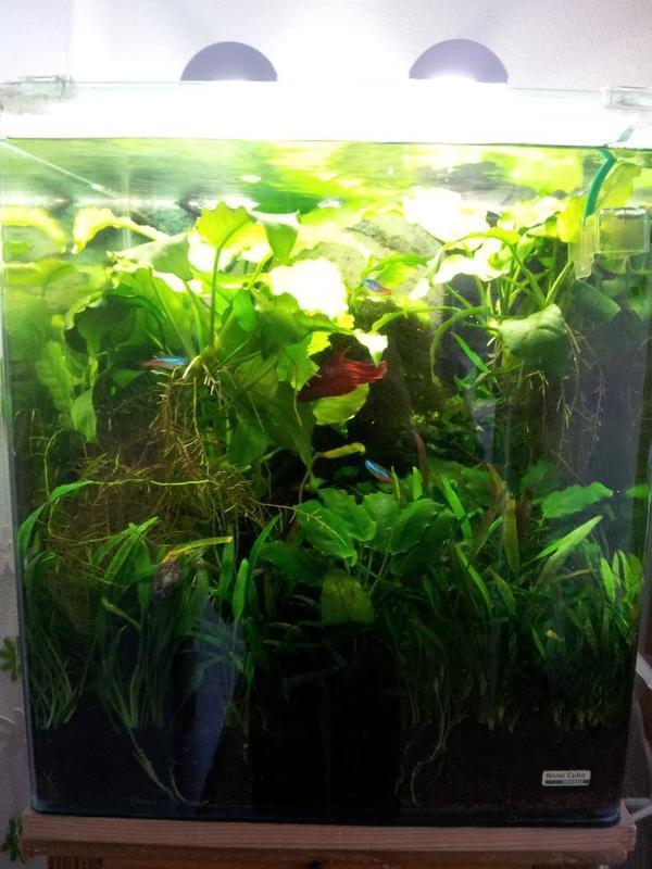 Nano aquarium tierwelt einebinsenweisheit for Aquarium wohnzimmertisch
