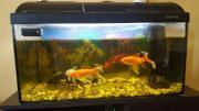 Aquarium ohne fisch