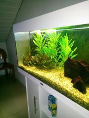 Aquarium weiß mit