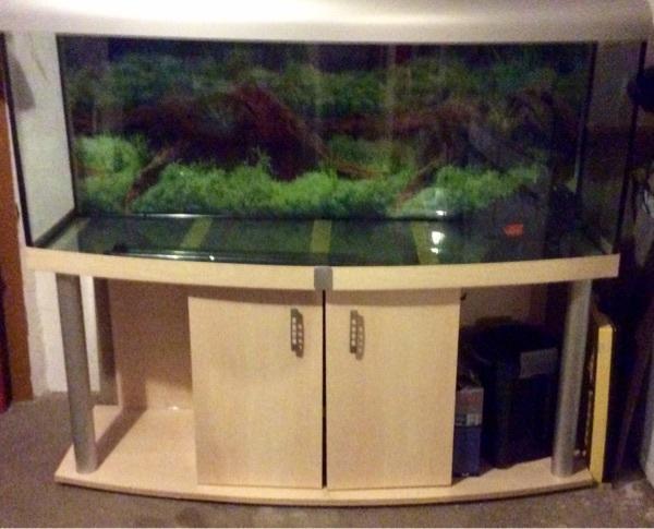 aquarium zu verkaufen in hagenbach fische aquaristik. Black Bedroom Furniture Sets. Home Design Ideas