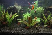 Aquatlantis Aquarium 100 /