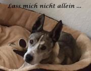 Biete Hundebetreuung - Hundesitter -