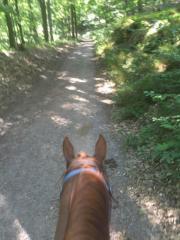 Biete Pony-/Pferdereiten