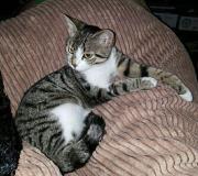 Bildhübsches Kitten