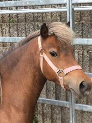 Classic Pony Classic Pony, Stute. Verkauf 5 jährige Classic Stute, aus Bestandsauflösung. Sehr scheu. 150,- ... 150,- D-64658Fürth Lörzenbach Heute, 18:23 Uhr, Fürth Lörzenbach - Classic Pony Classic Pony, Stute. Verkauf 5 jährige Classic Stute, aus Bestandsauflösung. Sehr scheu. 150,-