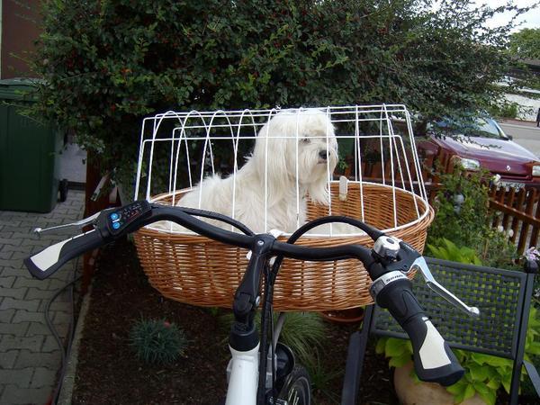 fahrradkorb in neulu heim hunde kaufen und verkaufen. Black Bedroom Furniture Sets. Home Design Ideas