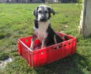 Familienhund Snoopy wartet