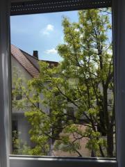 Fenster Putzer
