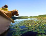 Ferien mit Hund,