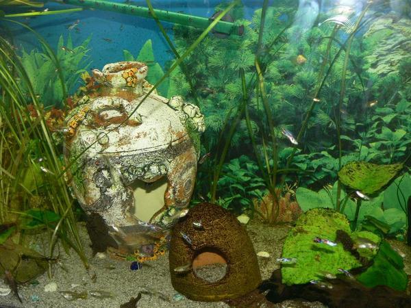 fische guppy aquarium in erlangen fische aquaristik. Black Bedroom Furniture Sets. Home Design Ideas