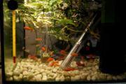 Fische und Pflanzen