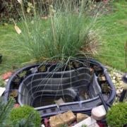 Gartenteichschale und Teichpumpe