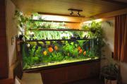 Grosse Aquariumanlage