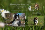 Hundefotografie, Fotograf, Hunde
