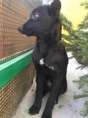 Hundemädchen Nadja möchte