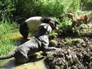 Hundepension sucht Aushilfe