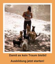 Hundetrainer Ausbildung nebenberuflich