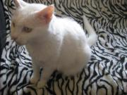 Jemma - ältere Katzendame