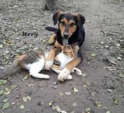 Jerry - 8 Mon,