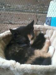 Junge Katzen (7-