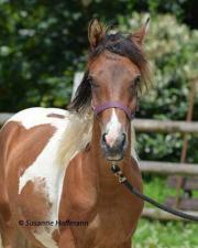Junges Pferd sucht