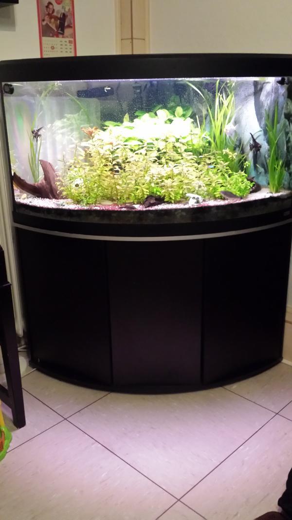 eckaquarium gebraucht kaufen nur noch 4 st bis 75 g nstiger. Black Bedroom Furniture Sets. Home Design Ideas