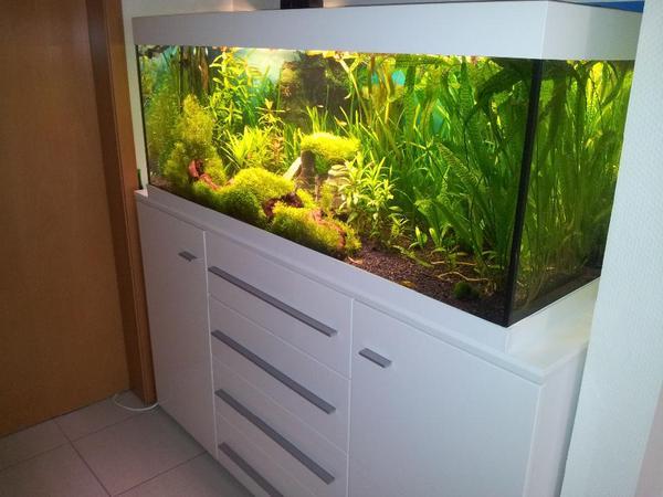 juwel rio 400 eheim 2026 co2 dennerle komplett osmose 130 in riedstadt fische aquaristik. Black Bedroom Furniture Sets. Home Design Ideas