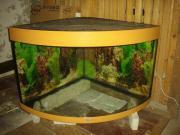 Juwel Trigon 190 Eck Aquarium für Fische oder als Terrarium für Nager Aquaristik: Aquarium. Biete hier ein Juwel Trigon 190 Liter Eck Aquarium oder als Terrarium an. Ich habe das Becken für vorübergehend benutzt. ... 70,- D-71522Backnang Heute, 23:05 Uhr, - Juwel Trigon 190 Eck Aquarium für Fische oder als Terrarium für Nager Aquaristik: Aquarium. Biete hier ein Juwel Trigon 190 Liter Eck Aquarium oder als Terrarium an. Ich habe das Becken für vorübergehend benutzt