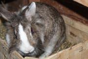 Käthe, schöne Kaninchendame