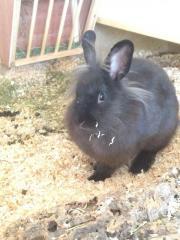 Kaninchendamen suchen neues